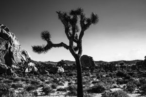 National Parks set new visitation records!