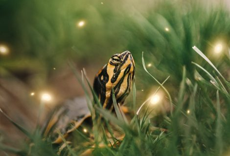 Fireflies at Great Smoky Mountain National Park